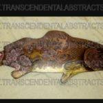 dale-werner-transcendental-abstrats-redfish-62018-2wmsm